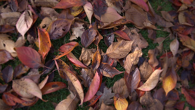Autumns Calling Cards