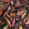 Autumns Calling Cards