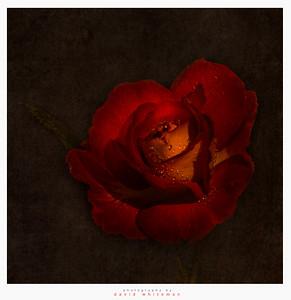 À la mémoire de Claude Monet