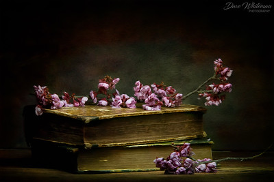 Blossoms and Books