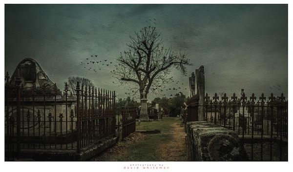 Avenue of Broken Dreams