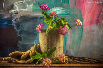 Sunday Still Life - Lantana