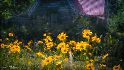 Summer flowers at the Gatekeepers Cottage