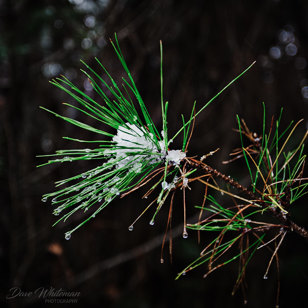 Winters Calling Card