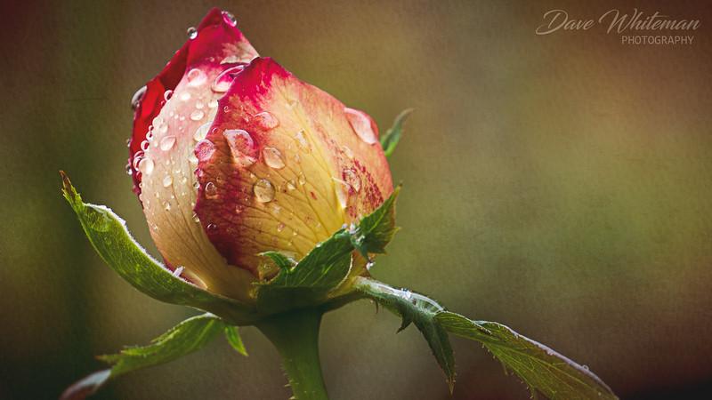 A Wee Drop 'O Rain