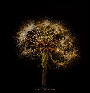 Natures Fireworks