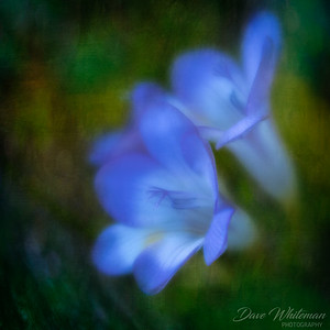 Homage to the Blue Hour