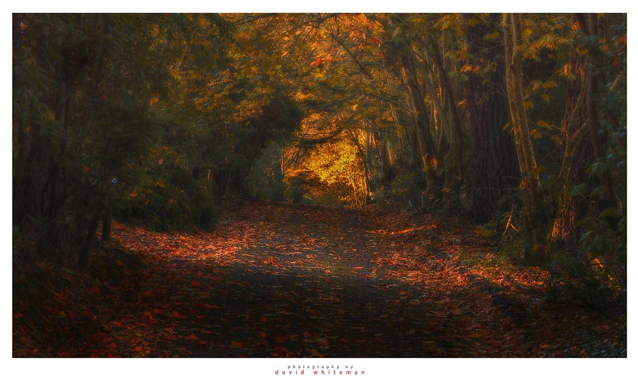 Autumn Afternoon Shipley Plateau