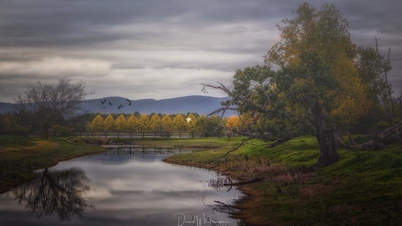 Lowlands Lagoon
