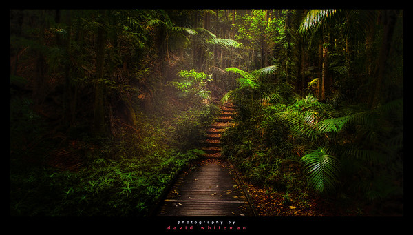 Rainforest at Breakfast Creek