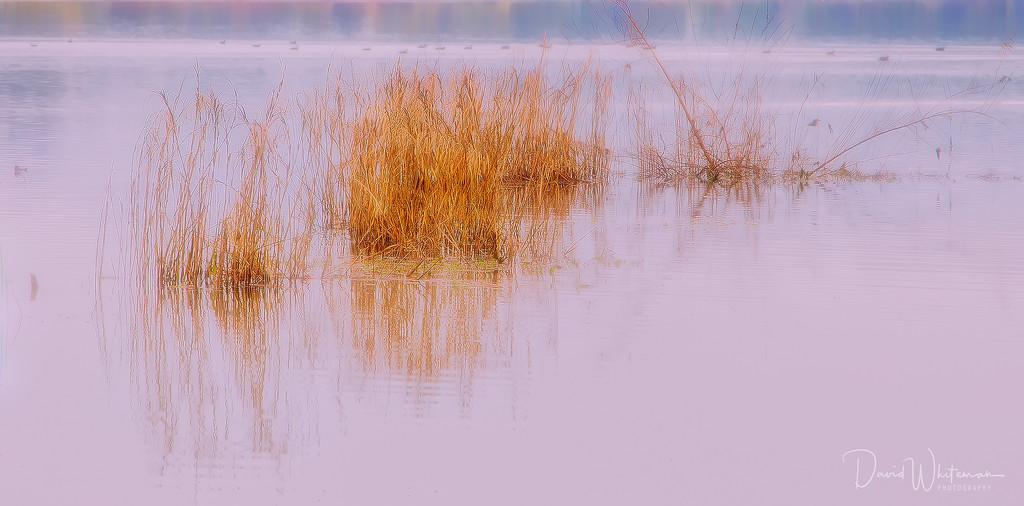 Daybreak on the Lagoon