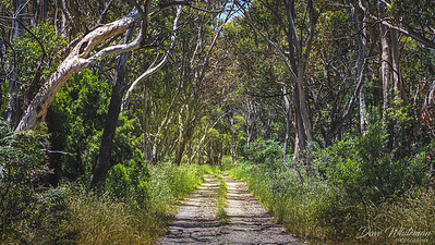 The Bush Track at Meadow Flat