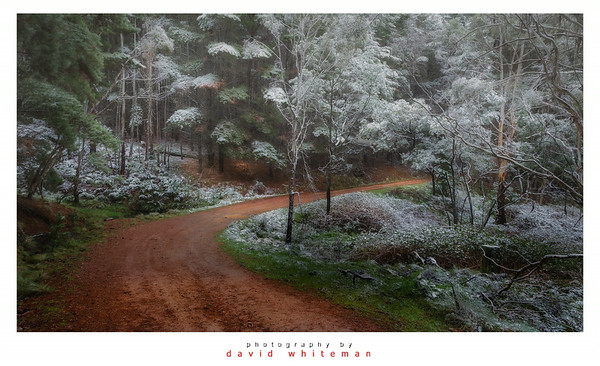 Forest Road in Winter