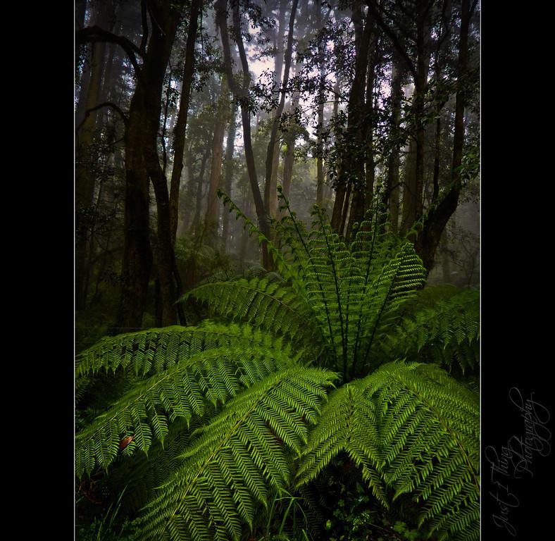 Rainforest Ferm