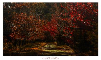 Crooked Lane in Autumn