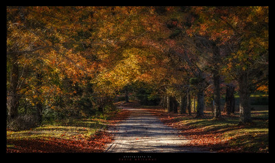 Sams Way in Autumn