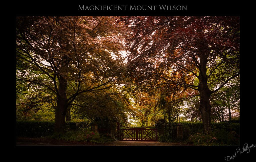 Magnificent Mount Wilson