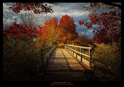 Autumn Morning in Beechworth