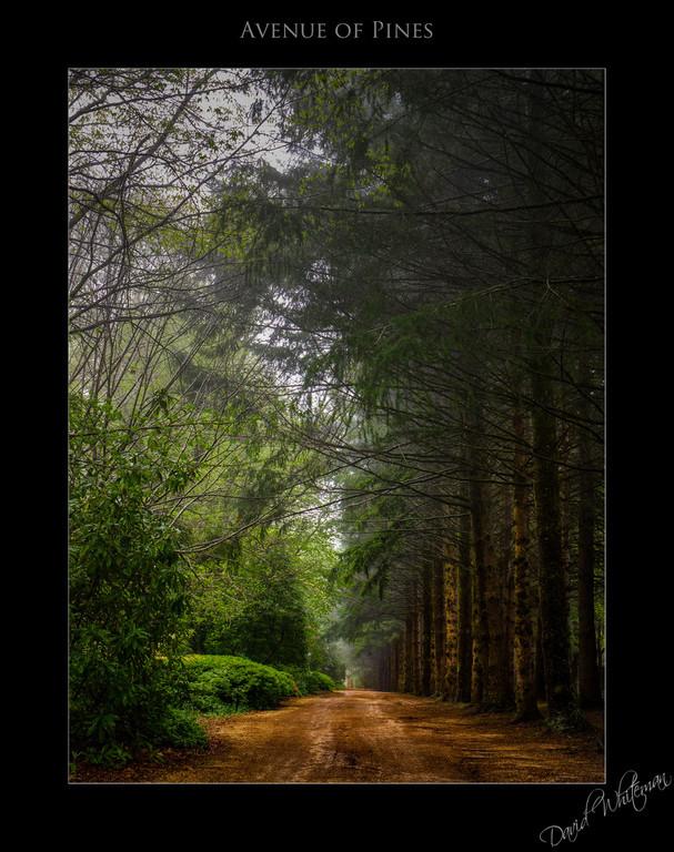 Avenue de Pines