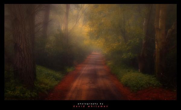 Shipley Mist