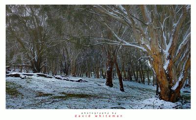 Australian Bush in Winter