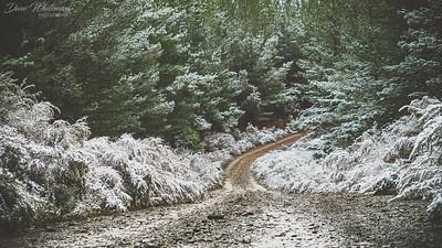 Behans Forest Road