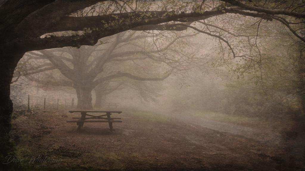 Misty Morning in Mount Wilson