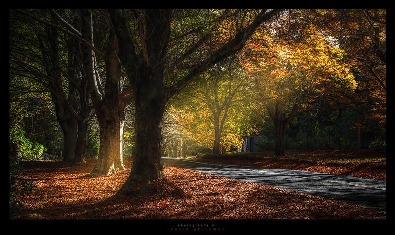 Mount Wilson in Autumn