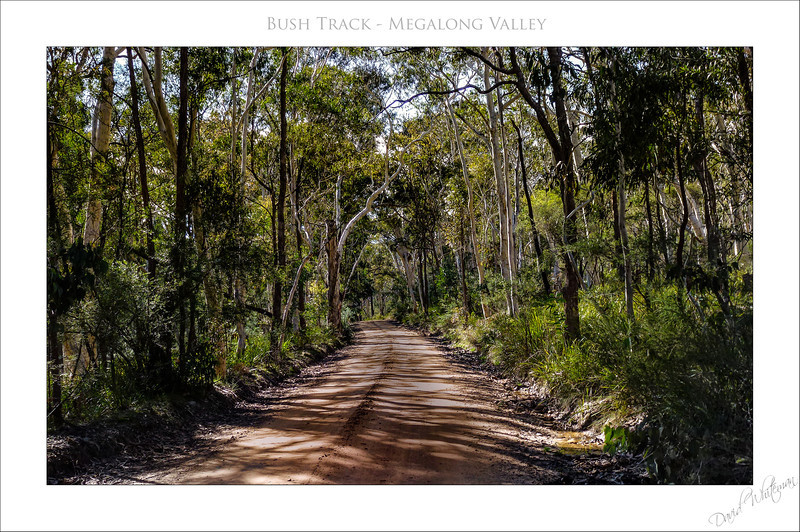 Bush Track - Megalong Valley