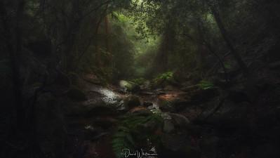Lapstone Creek in Mist