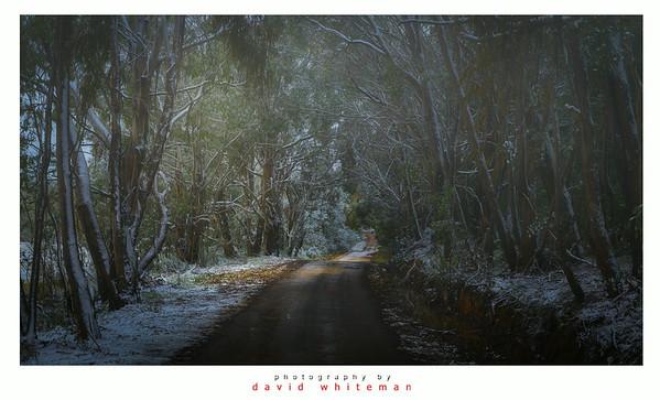 Bush Road in Winter