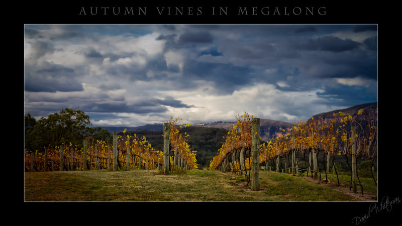 Autumn Vies in Megalong