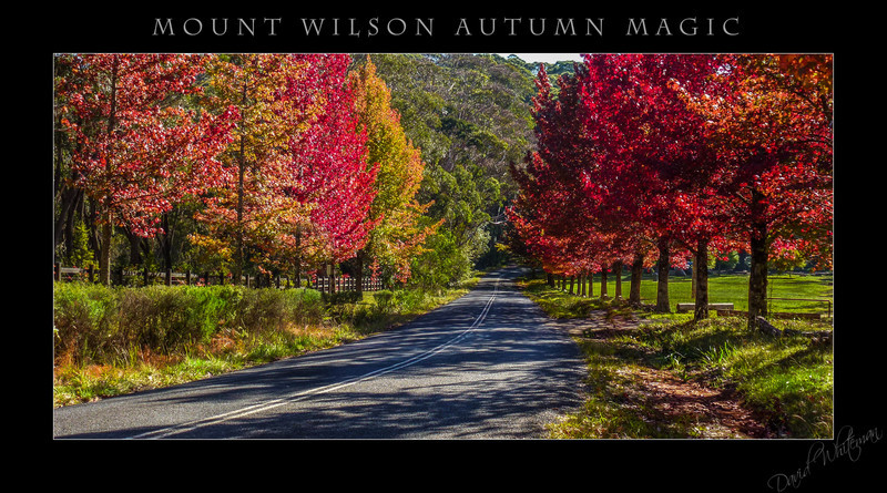 Mt Wilson Autumn Magic