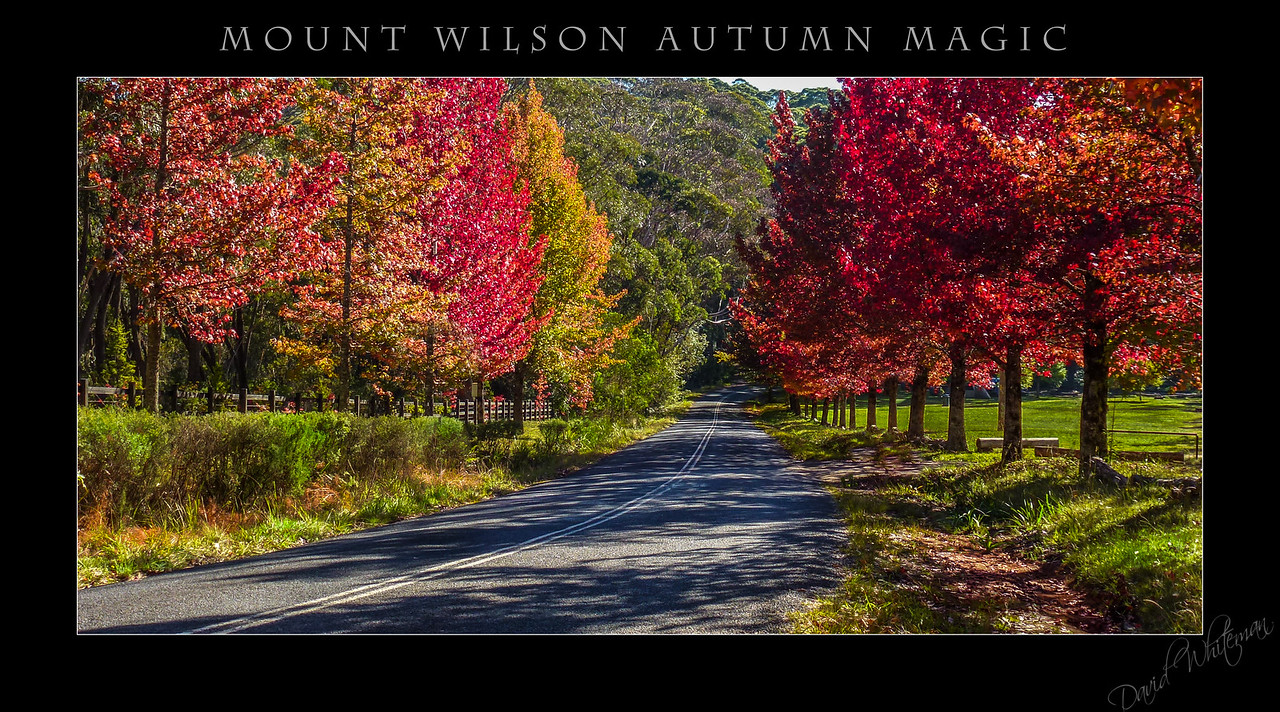 Mt Wilson Autumn Magic