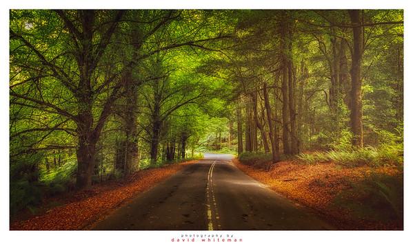 Early Autumn Mt Wilson