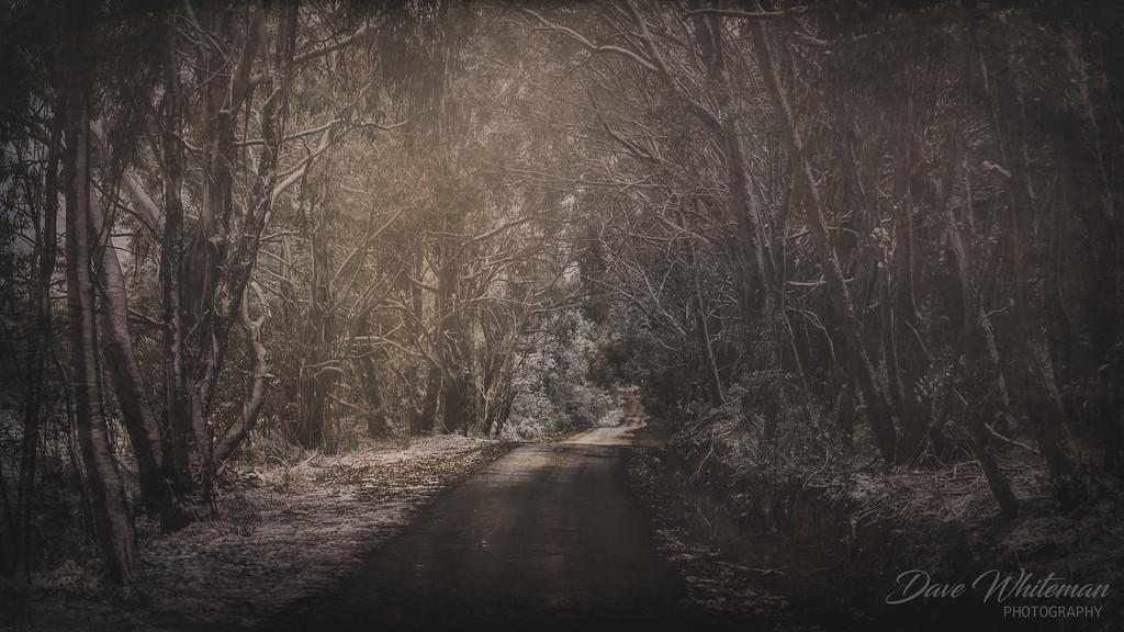 Bush Track in Winter