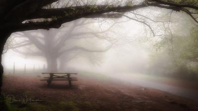 Misty Morning at Mt Wilson