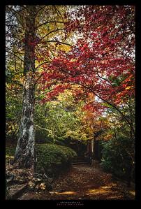 Anticipation of Autumn