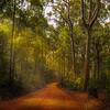 Sunbeams on bush track