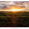 Riverina Sunset