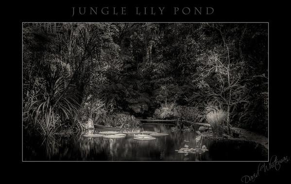 Jungle Lily Pond
