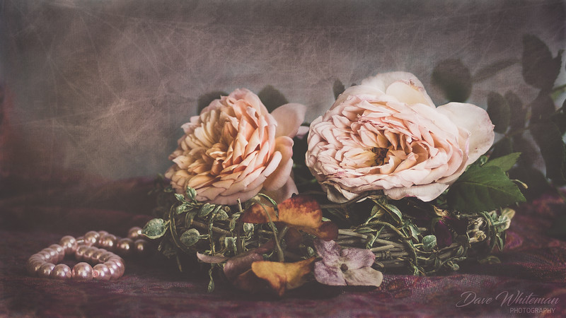Ivy's Roses