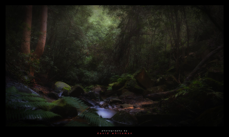 Lapstone Creek Rainforest