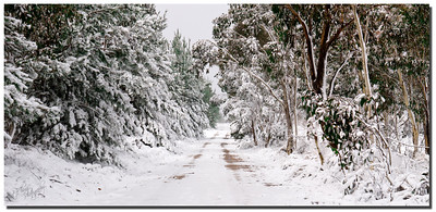 Australian Bush in Winter