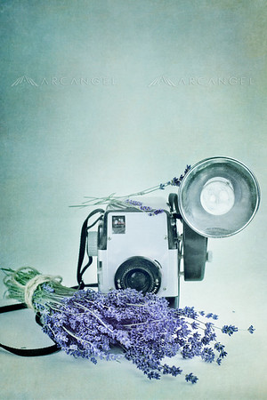 Lavender and Vintage Camera