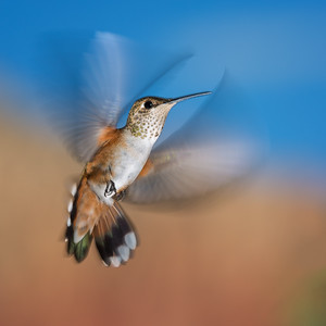 Wing-speed Blur, Fine Art Photography