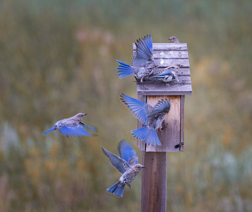 Crowded House, Fine Art Nature Photography
