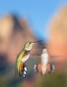 Red Rock Hummers, Fine Art Photography, Colorado Springs and Monument, Colorado