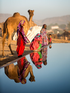 Pushkar Camel Fair, Pushkar, Rajasthan, India, India