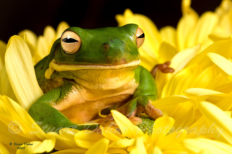"""This picture can be found under """"Animals"""" > """"Reptiles and Amphibians"""""""